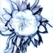 cropped-watercolour-moon-e1408637498519
